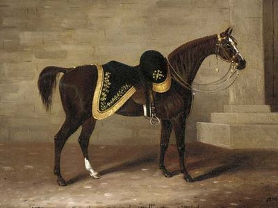 10 famous horses from history | MNN - Mother Nature Network