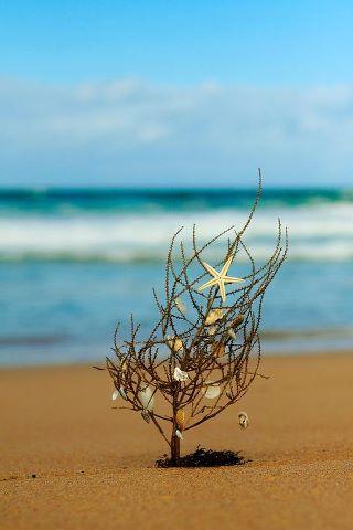 Seaside Holiday Season Holiday Ideas Pinterest Seaside