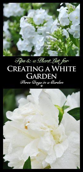 Creating a White Garden (Sun Edition)