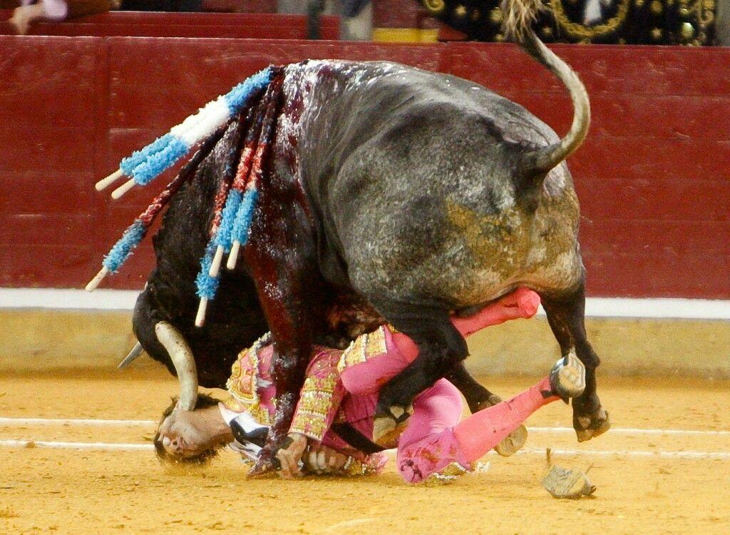 Desi wife fuck with bull