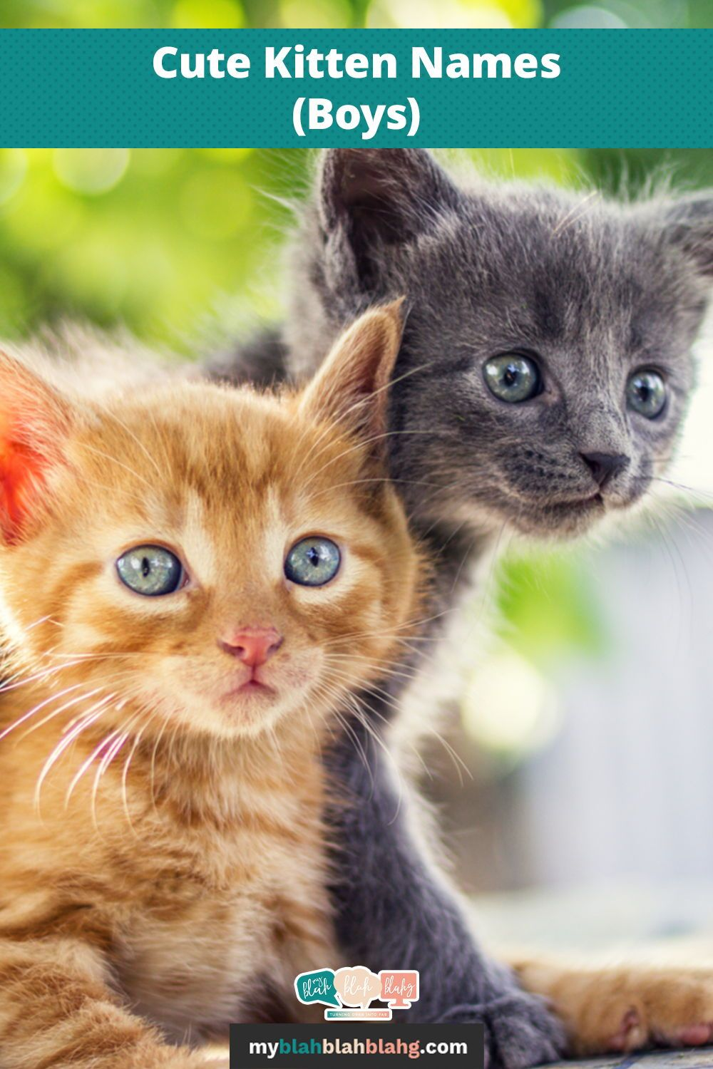 Cute Boy Kitten Names In 2020 Kitten Names Kitten Names Boy Kittens Cutest