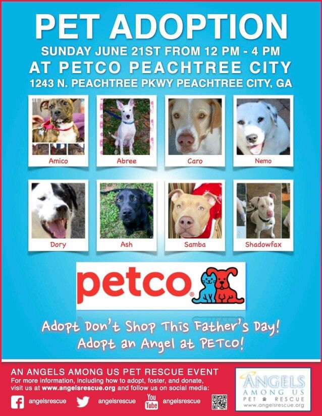 Sundays Adoptions At Petco Pet Adoption Adoption Day Animal Rescue