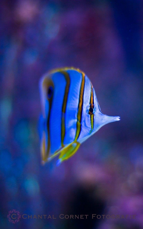 Colorful blue fish
