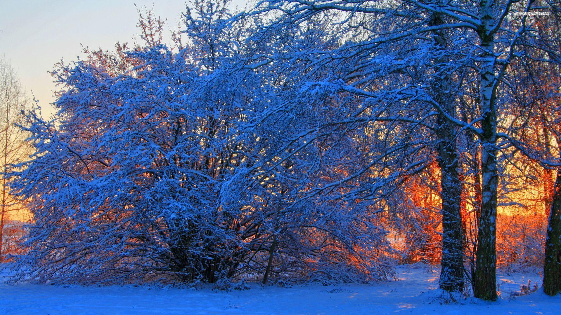 Orange sunrise in the winter wallpaper