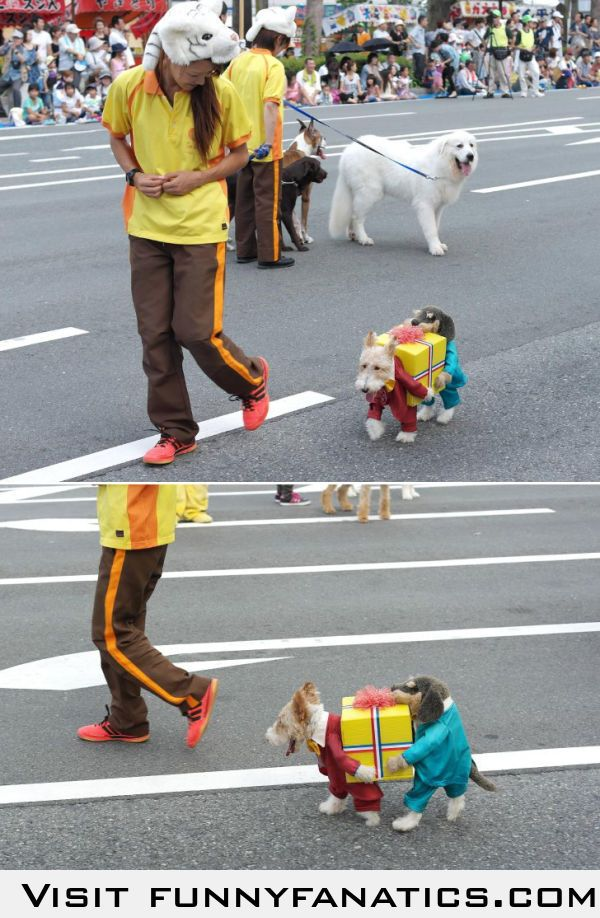 Dog Dressed As Two Dogs Holding A Present Best Dog Costumes