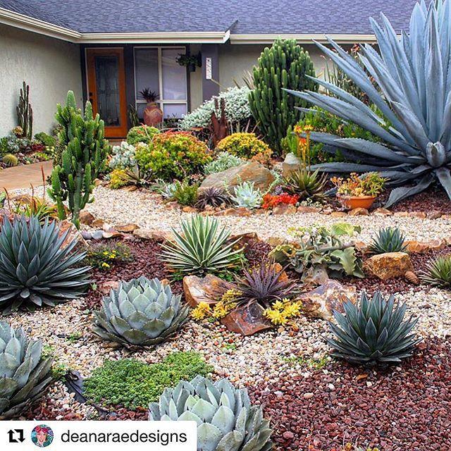 My Newsletter This Week Features Deanaraedesigns Near Santa Barbar Succulent Landscaping