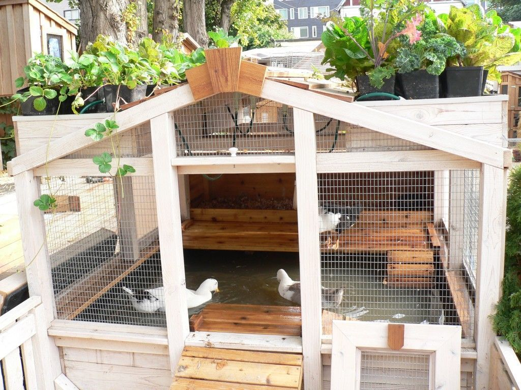 pond - clever design using aquaponics - recycles the water to the plants on top, and then back to the ducks