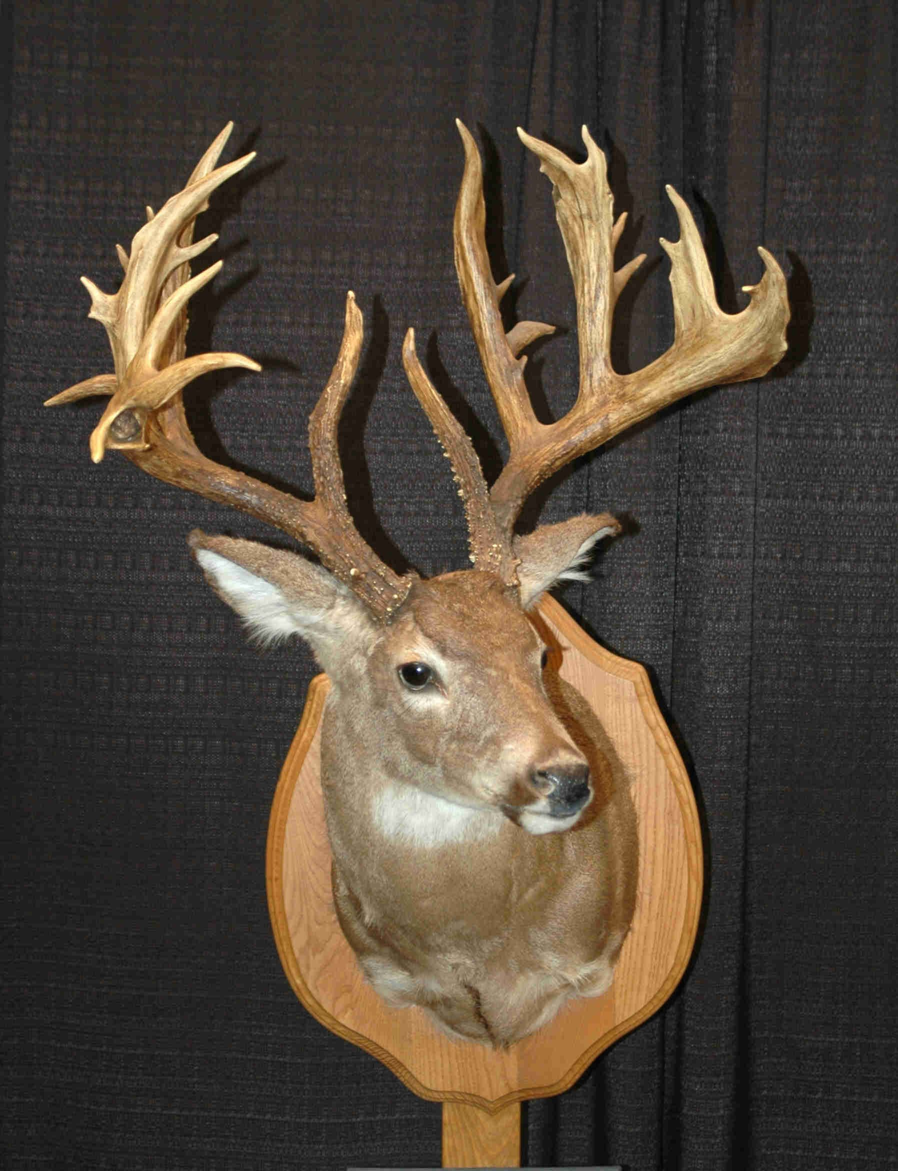Great Non Typical Whitetails