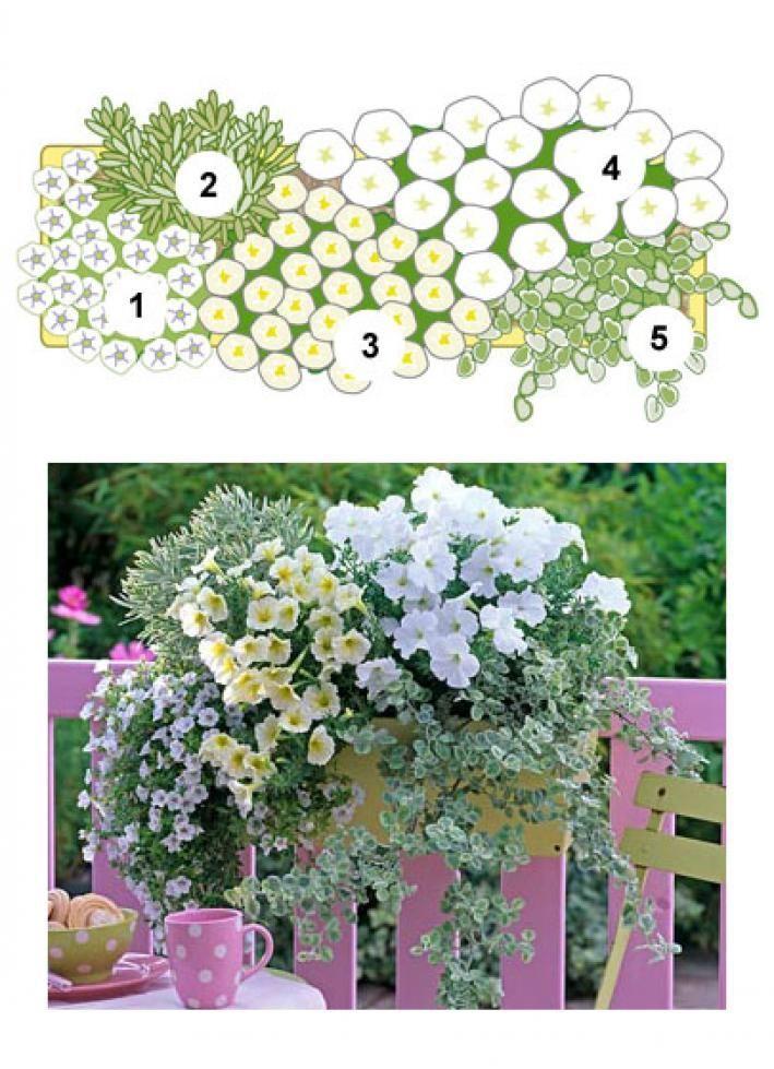 Balkonblumen Fantasievoll Kombiniert Balkon Blumen Pflanzideen