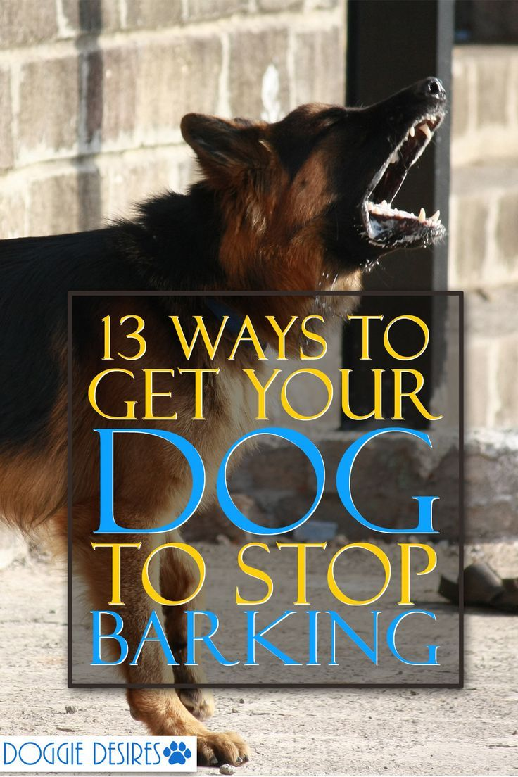 13 Ways To Get Your Dog To Stop Barking Stop Dog Barking Dog