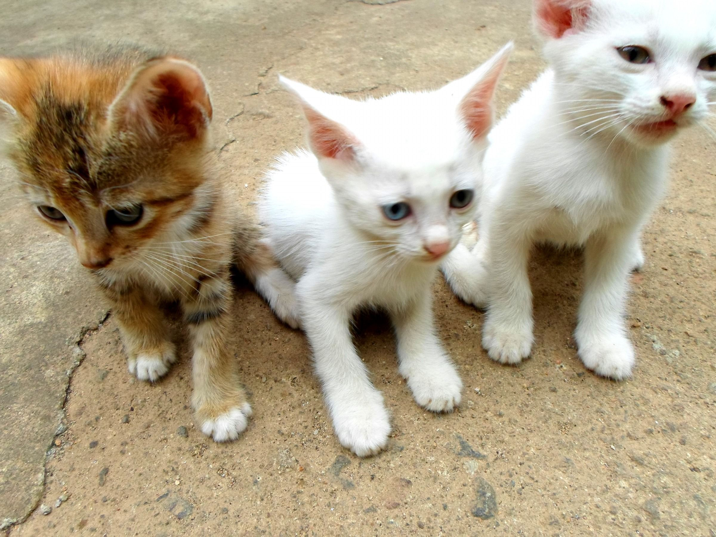 Cute Puppies With Cute Kittens Cute Unicorn Kittens Cute Van Kittens Cute Zombie Kittens Good Names For Cu Cute Cat Breeds Super Cute Kittens Kitten Images