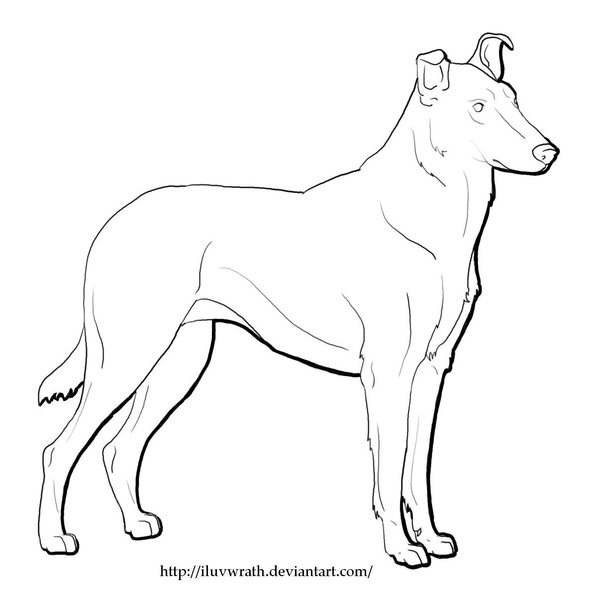 Smooth Collie Lineart By O Akilove O Smooth Collie Collie Dog Coloring Page