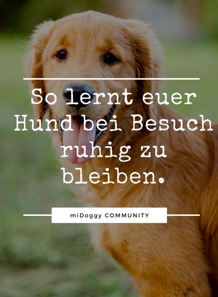 Besuch Kommt Das Musste Mia Lernen Hunde Welpen Erziehung Welpen Und Hunde