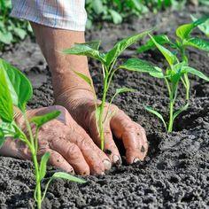Marc de café : 4 astuces pour votre jardin ! en 2020   Marc de café jardin, Marc de café ...