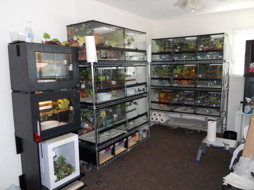 温室 爬虫類