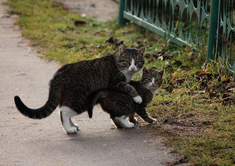 Для, картинки осторожно смешной котенок