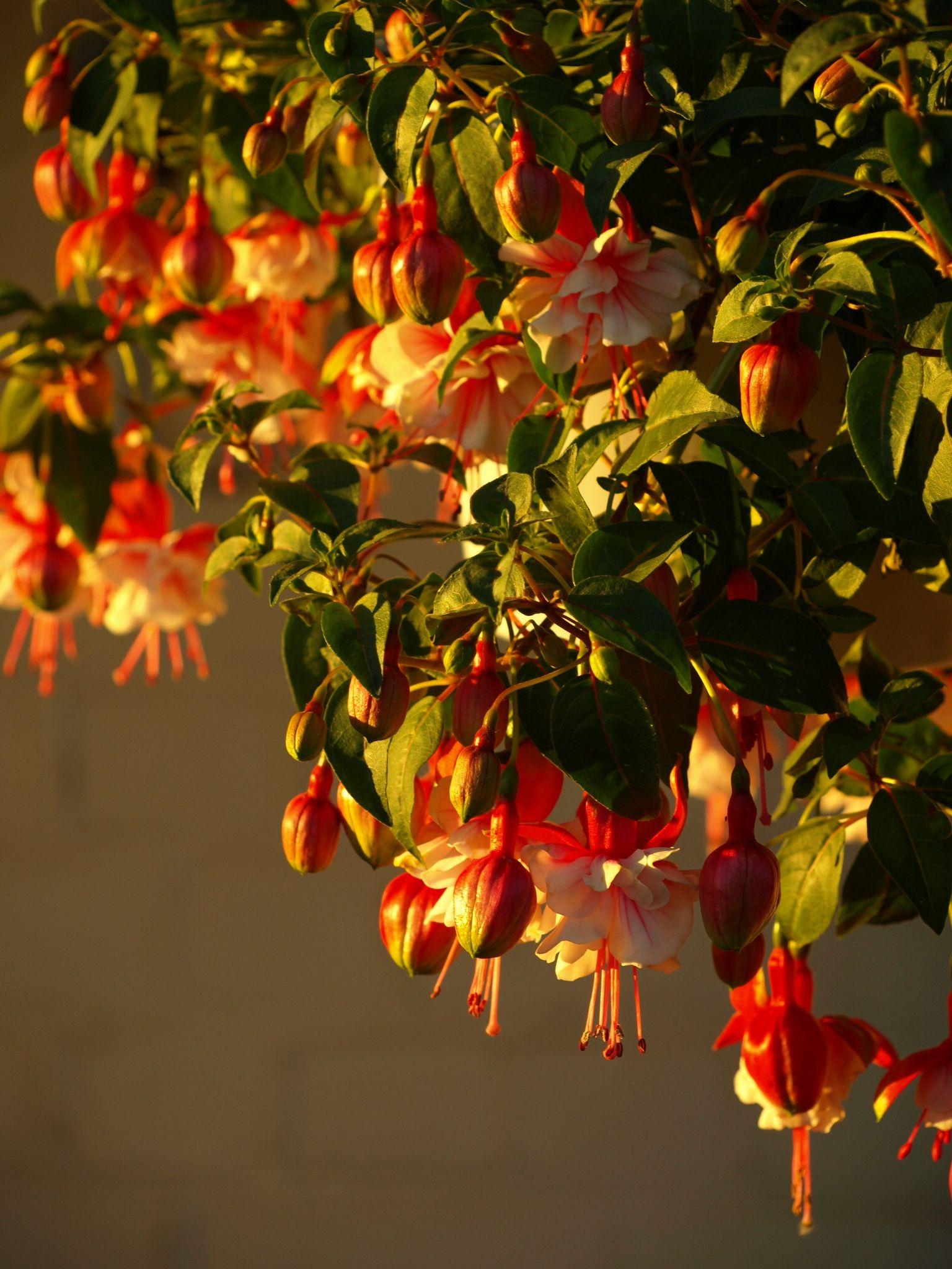 Фотография Flowers in sunset автор Anda Nordena на 500px
