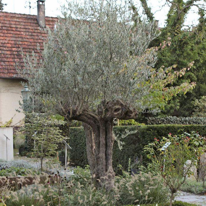 Tauschend Echt Die Doppelganger Mediterraner Pflanzen Mediterrane Pflanzen Mediterraner Garten Garten Pflanzen