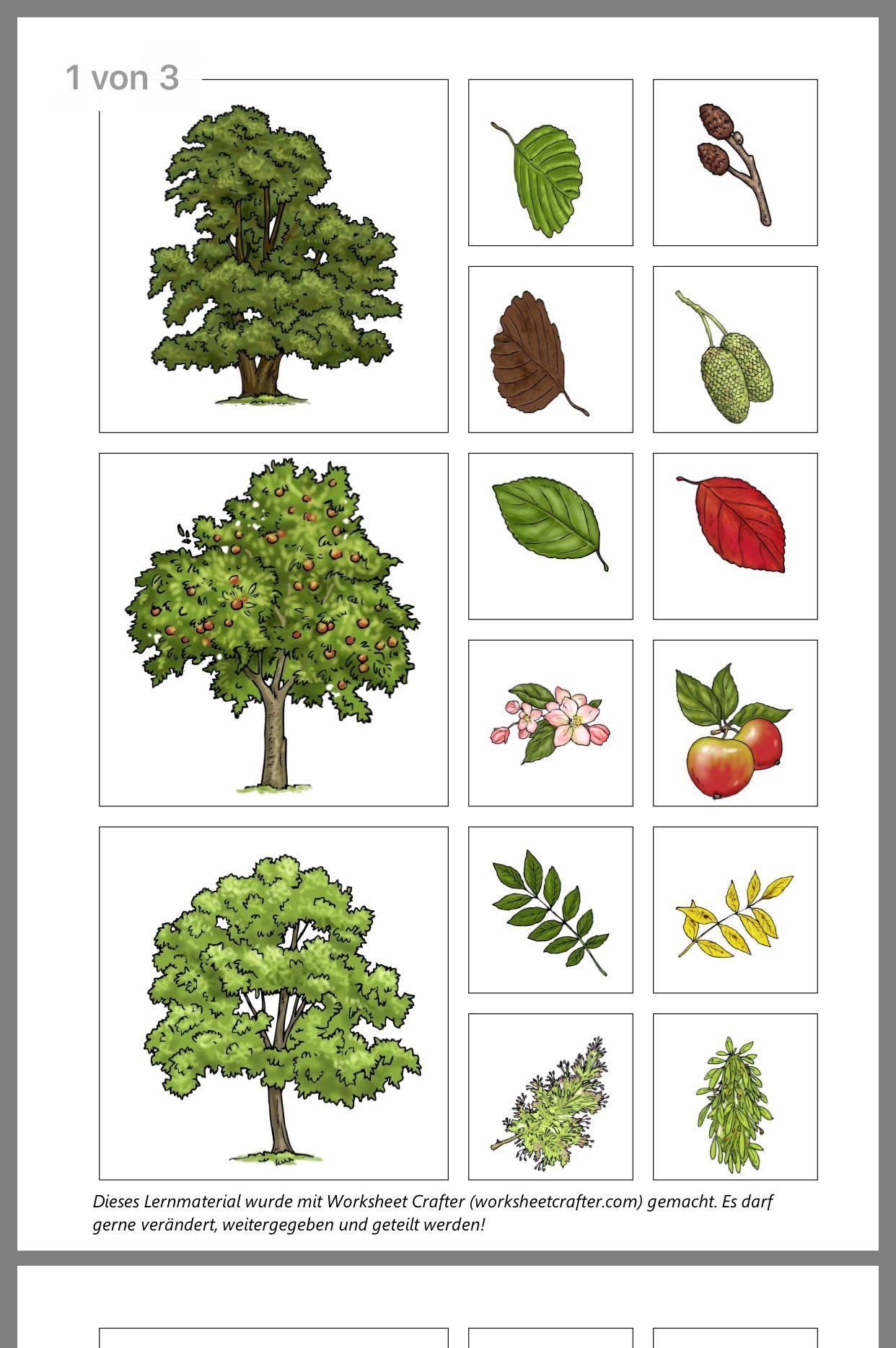 Laubbäume bestimmen heimische blätter Bäume