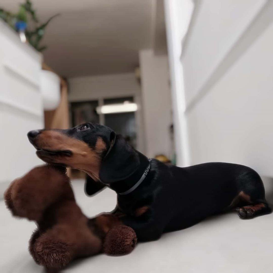 ... #dog #dogsofinstagram #dogs #puppy #dogstagram #instadog #pet #doglover #love #dogoftheday #cute #doglovers #instagram #pets #of #puppylove #doggo #puppies #cat #doglife #puppiesofinstagram #ilovemydog #dogsofinsta #animals #hund #doggy #petstagram #k #animal