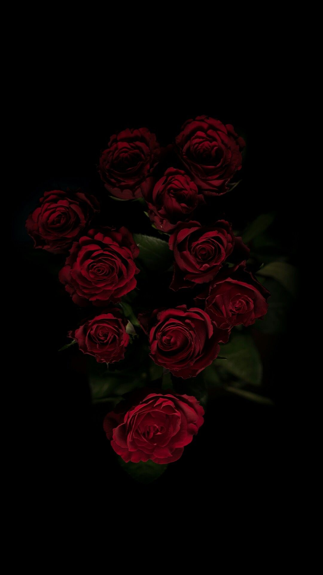 Black Rose Nature Iphone Wallpaper Rose Wallpaper Black Background Wallpaper