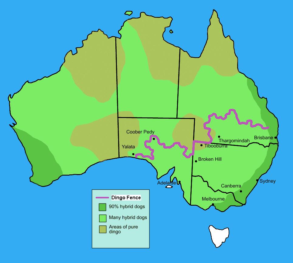 Australia Map Looks Like A Dog.This Is What The Dingo Population Looks Like Straya Australia