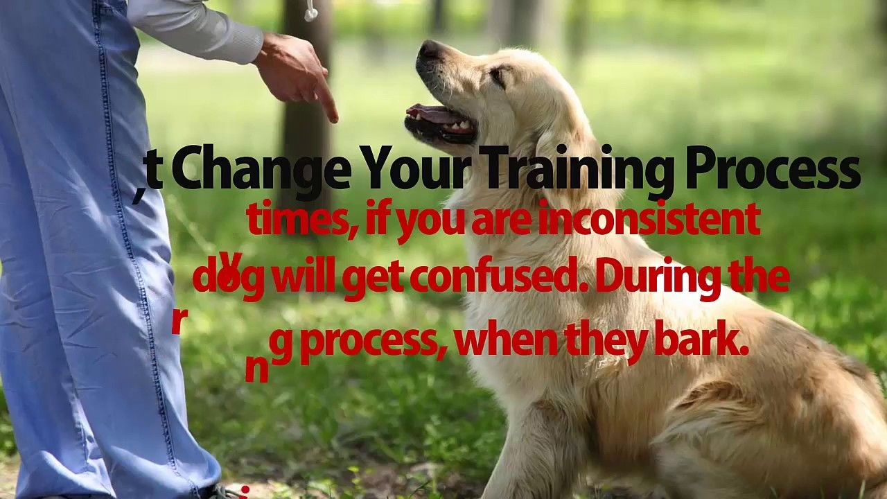 how to train a dog not to bark