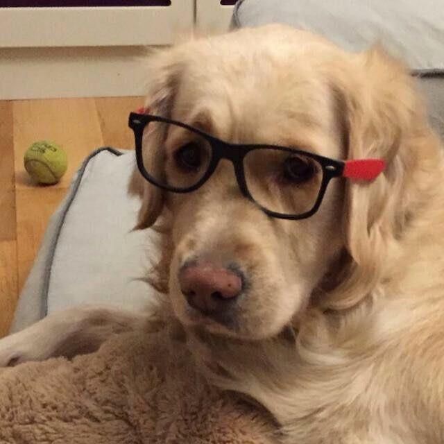 Les presento a Sam, una perrita muy intelectual!!!  y gran amiga de b¡nuestra tienda online para mascotas Best for Pets