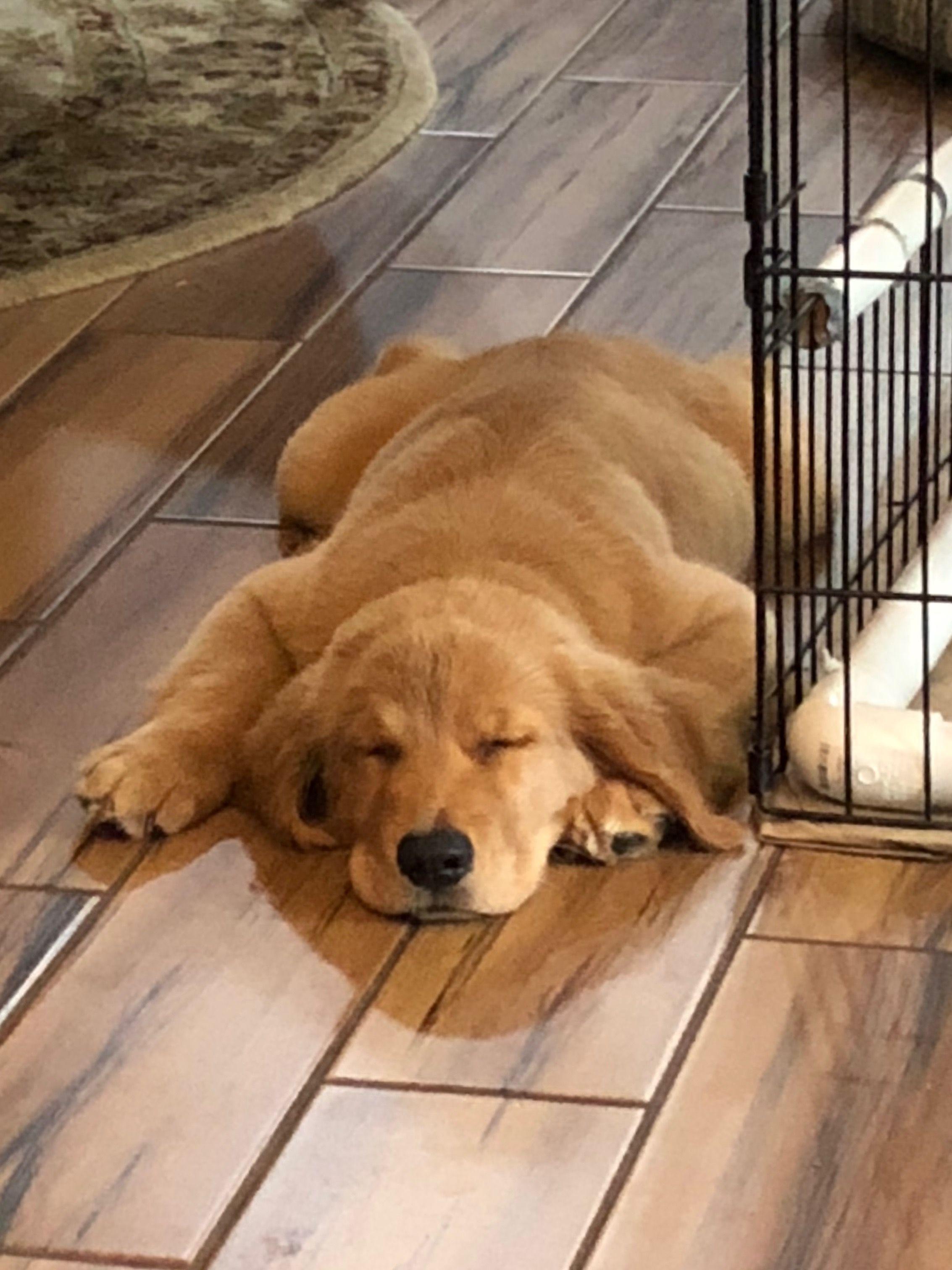 Pin By Debbie Edmundson On Goldens Retriever Puppy Golden