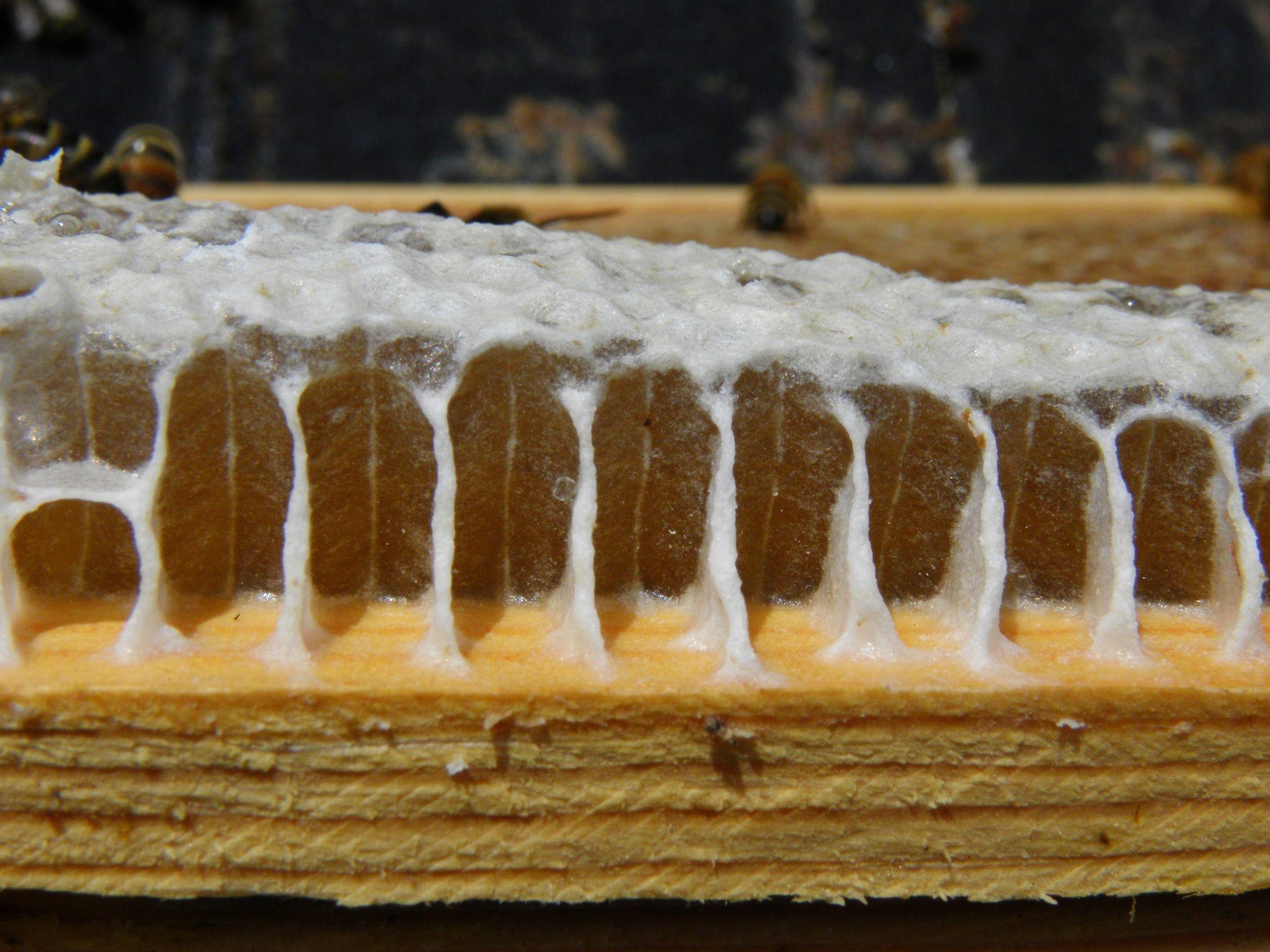 Pin by jake yarish on what do honeybees do
