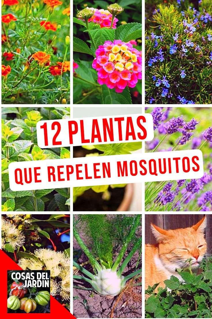 12 plantas que son repelentes naturales de mosquitos