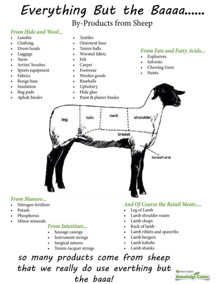 sheep animal everything sheet science worksheet livestock farm fact lamb animals facts agriculture ag judging key byproducts goats cow answer