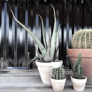 Instagram foto door frustilista - Addicted | cactus | Holy Smoke BBQ #morning#cactus#pic#from#holysmokebbq#by#me#frustilista#stilista#jenny...