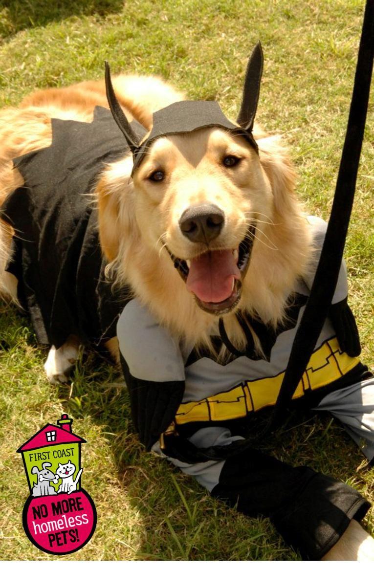 Batdog Dogtoberfest 2012 First Coast No More Homeless Pets