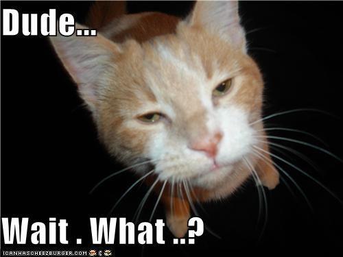 Dude. Wait. Wut?   Dude, Memes, Cats