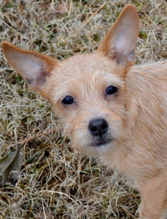Toxirn Dog For Adoption In Yardley Pa Adn 416091 On Puppyfinder
