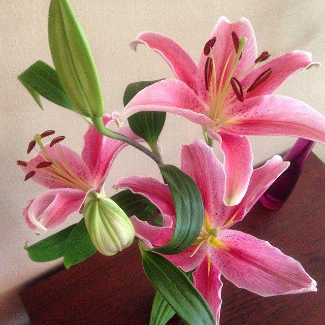 Happy Sunday! #instasunday #instaflowers #lilies #iloveflowers