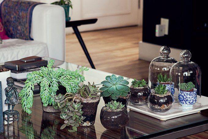 Sim, você pode ter espécies lindas e saudáveis dentro de casa.Para isso, é preciso escolher as que se adaptam à sombra e dedicar a elas tempo e carinho.