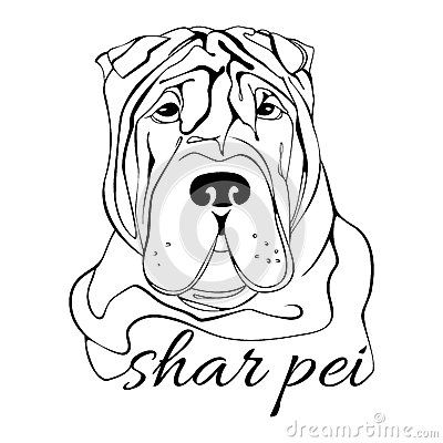 Shar Pei Dog Head