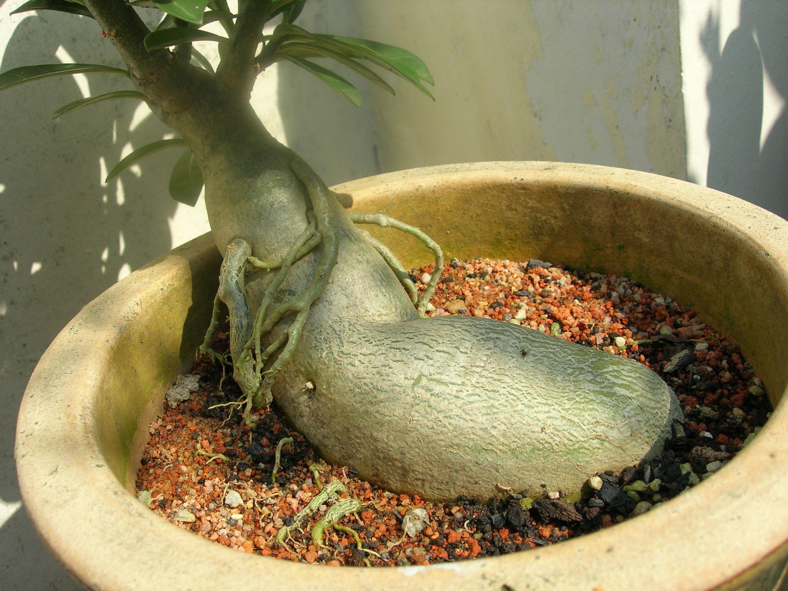 13+ Plants that look like animals ideas