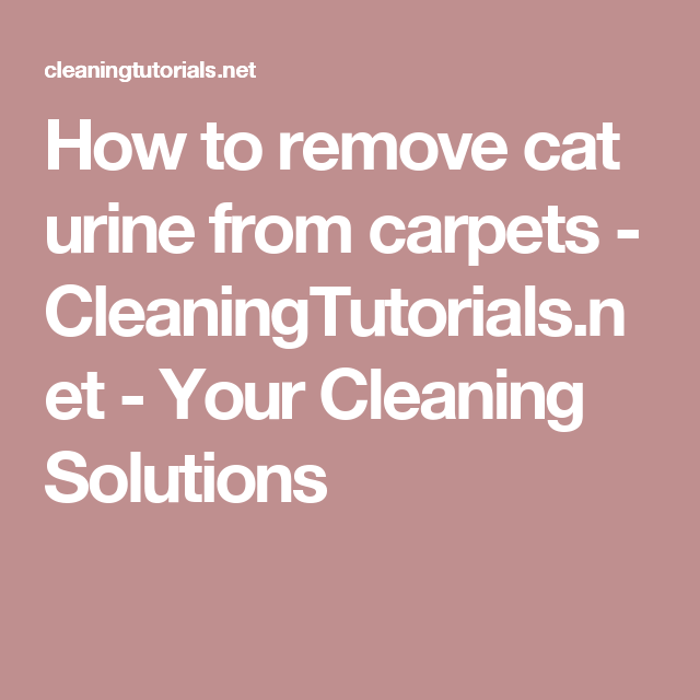 How to remove cat urine from carpets - CleaningTutorials.net - Your Cleaning Solutions