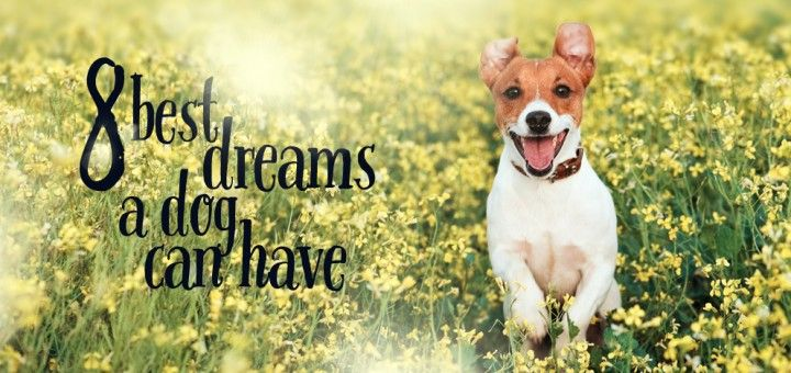 8 Best Dreams a Dog Can Have