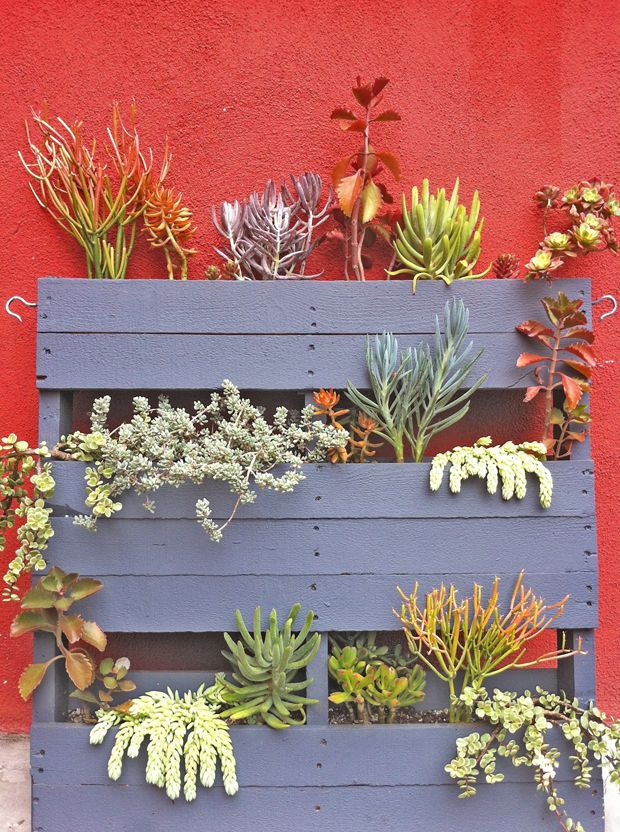 Upcycled Pallet Persuasion: Pallet succulent garden at Guisados in Silverlake, Los Angeles | Photo by Justina Blakeney