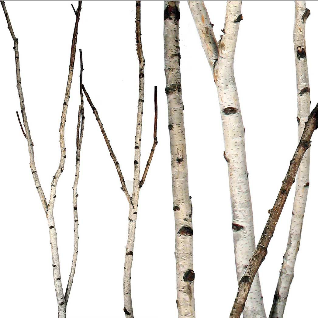 birch branches birch forks party event diy pinterest birch branches and birch