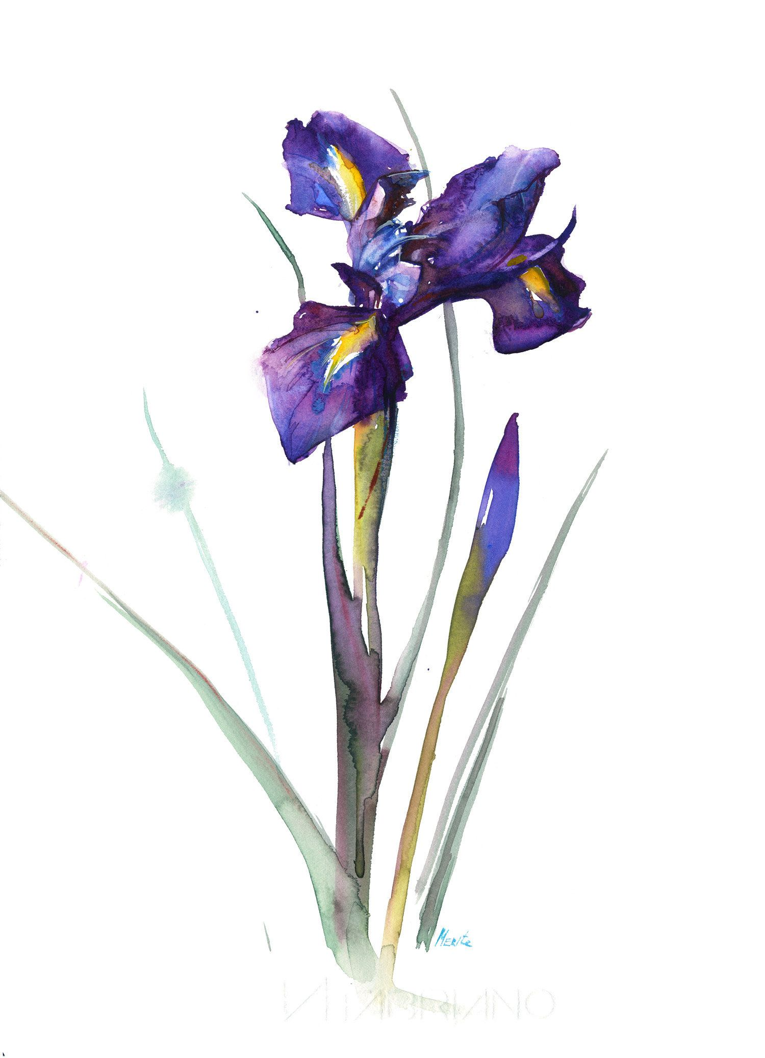 Purple Iris Illustration Print Iris Flower Watercolour Painting