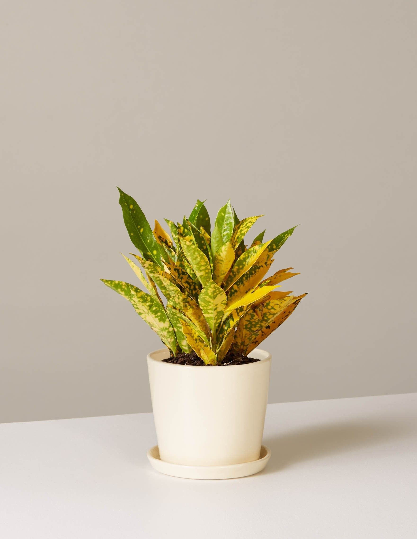 The Best Colorful House Plants To Add Style To Your Home 400 x 300