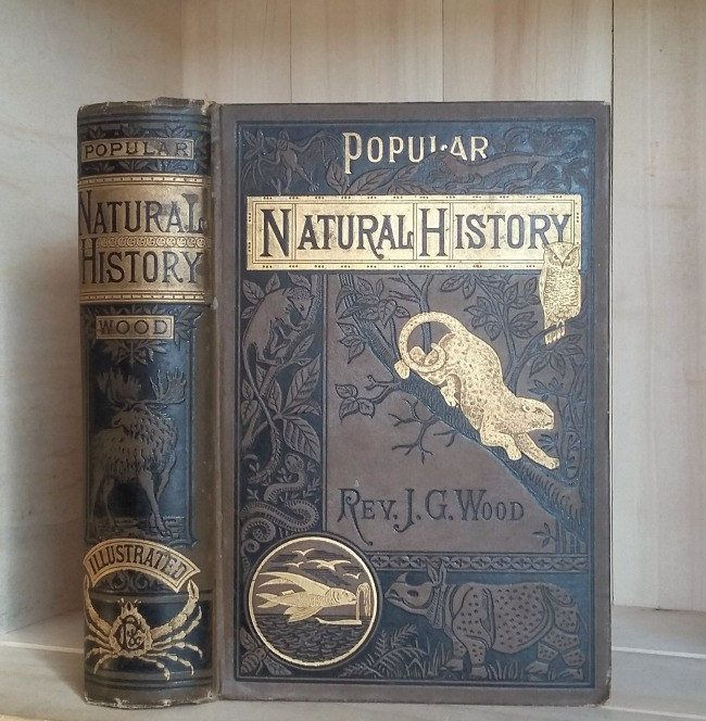 Antique Book Popular Natural History By Reverend Wood 1885 Decorative Victorian Binding Illustrated Wild Anim Antique Books Beautiful Book Covers Vintage Books