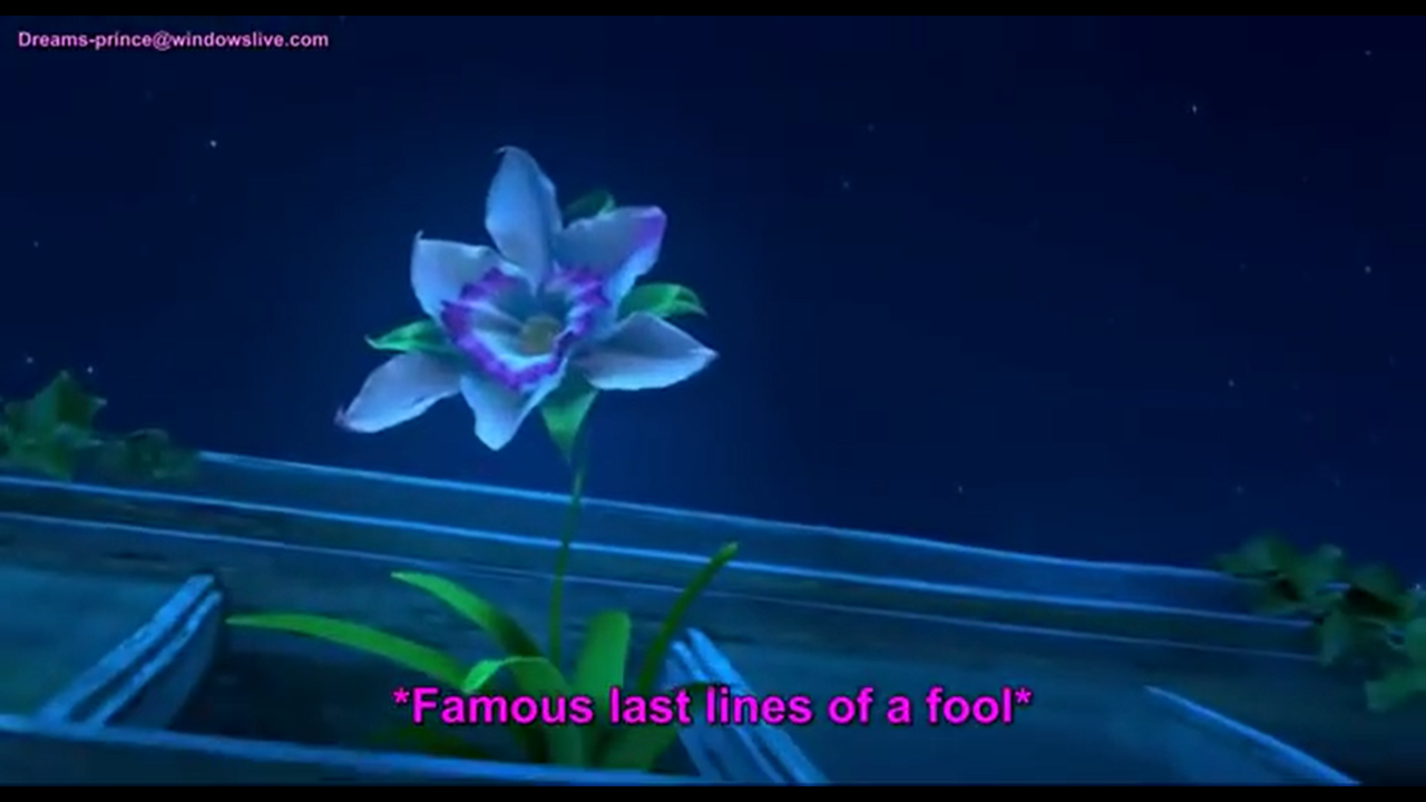 The Cupid S Arrow Orchid From Gnomeo And Juliet Cupids Arrow Orchids Cupid