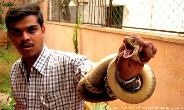 Babu is a snake catcher who lives in Bangalore, India. He has caught a ratsnake. Photo by Stuart Forster.
