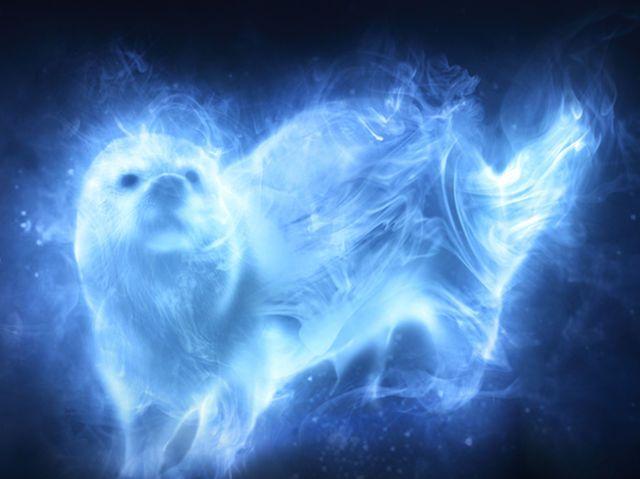 Quiz What Would Your Patronus Be Películas De Harry Potter Harry Potter Signos Del Zodiaco